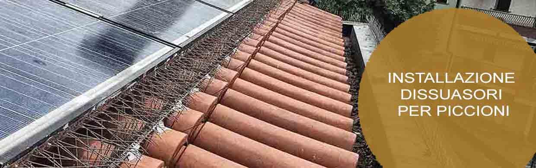 Installazione dissuasori per piccioni