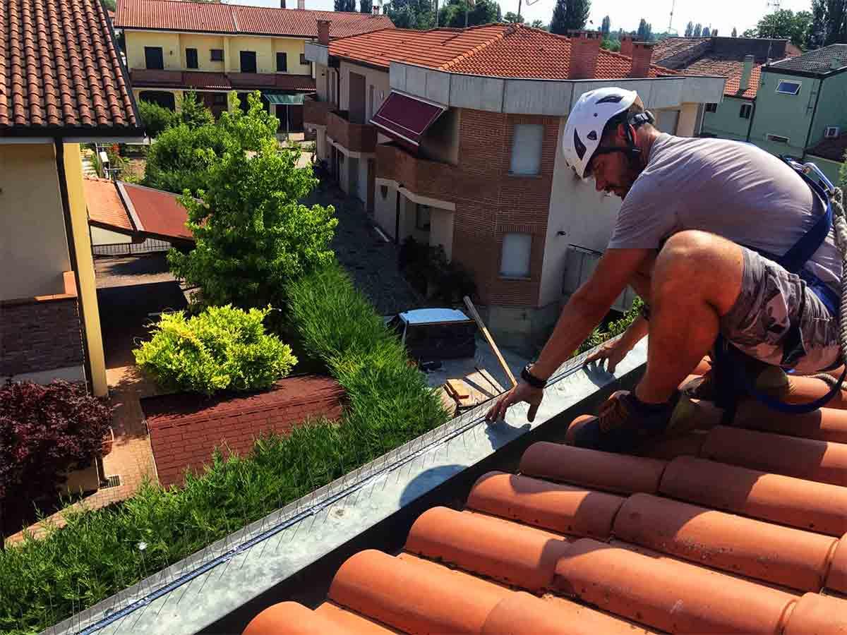 euroclean perch installare i dissuasori per piccioni
